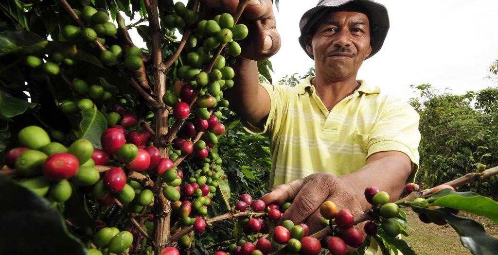Plataforma de Agricultura Sostenible SAFE